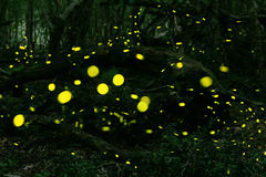 Fireflies at forest near Burgas, Bulgaria stock photos