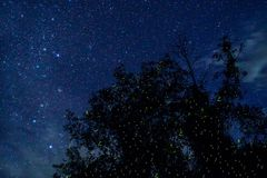 Fireflies Glowing at Night. On Borneo Island Stock Images