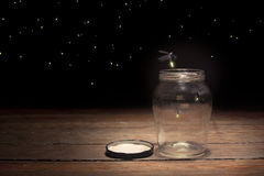 Fireflies in a jar Stock Photography