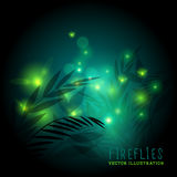 Fireflies At Night. Fireflies in the forest at night - vector illustration Stock Image