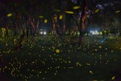Fireflies Night Stock Images 191 Photos