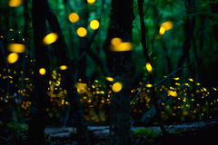 Fireflies in the summer near Burgas city, Bulgaria Royalty Free Stock Photos
