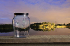 Fireflies at sunset Stock Photography