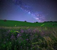 Fireflies under The Milky Way. The glow of fireflies under The Milky Way in the Ohio countryside Royalty Free Stock Image