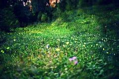 Fireflies Stock Photos