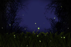 Firefly. royalty free stock image