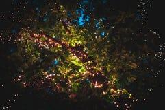 firefly royaltyfri fotografi
