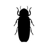 Firefly beetle Lampyridae. Sketch of Firefly Stock Images
