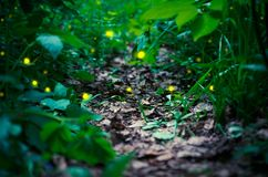Firefly in the forest. Selective focus Stock Photography