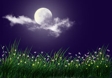 Firefly and full moon background. Firefly and grass full moon background Stock Photo