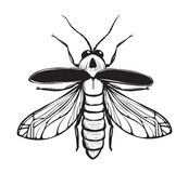 Firefly Insect Black Inky Drawing. Bug glowworm or lightning bug illustration. Vector EPS8 Royalty Free Stock Images