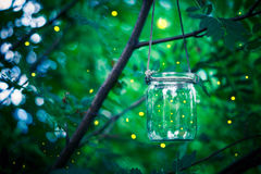 Firefly in a jar Royalty Free Stock Images