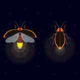 Firefly with open and closed wings. Firefly bug with open and closed wings on dark background. Bug glowworm symbol. Luminous lightning bug   illustration. Two Royalty Free Stock Images