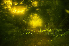 Firefly. Real fireflies at a calm night Royalty Free Stock Photo