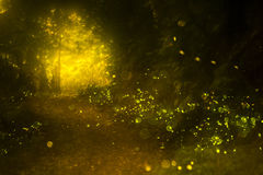 Firefly. Real fireflies at a calm night Stock Images