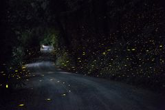 Firefly Road Royalty Free Stock Images