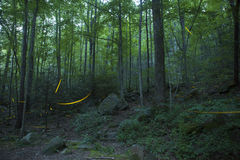 Firefly trails at night in forest Royalty Free Stock Image
