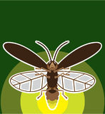 Firefly. Vector illustration clip-art simplistic Stock Images