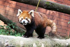 Firefox Immagini Stock Libere da Diritti