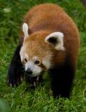 Firefox Immagine Stock