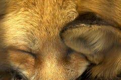 Firefox Fotografia Stock