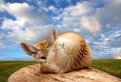 Firefox en un árbol fotos de archivo