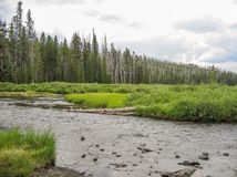 Firehole River Flowing Through Yellowstone National Park. The Firehole River flows through several significant geyser basins in Yellowstone National Park. The stock photo