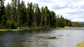 Firehole River Yellowstone National Park stock video footage