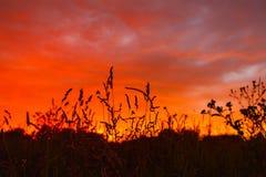 Firely solnedgång Royaltyfri Fotografi