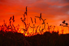 Firely sunset. Colorful firely sunset in field Royalty Free Stock Photo