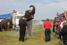 Fireman Gives Circus Elephant a Bath. The local fire department visited the traveling circus the day of the show to give the elephants a bath Stock Image