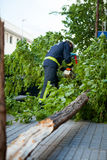 Fireman working in a broken tree after a wind storm. Royalty Free Stock Photography