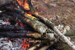 Fireplace with charred logs and smoke and flame in forest closeup. Wood and charcoal ash in bonfire. Glowing firewood. Tourism background Stock Image