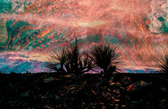 Firery Burnout. Artsy Rendition of Yucca Plants after a Forest Fire Royalty Free Stock Photography