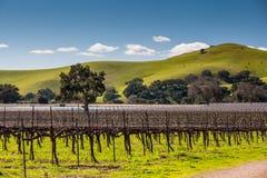 Firestone Winery Royalty Free Stock Image