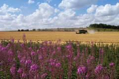 Fireweed and harvester. Blue sky Stock Photos