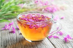 Fireweed healthy herbal tea. Mug of chamerion tea and bunch of medicinal herbs. Fireweed healthy herbal tea. Mug of chamerion tea and bunch of medicinal herbs royalty free stock photography