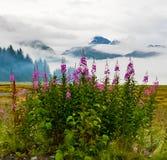 Fireweed im Nebel nahe Valdez, Alaska stockfotografie