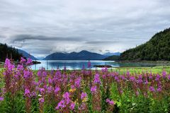Fireweed Mountain View. Royalty Free Stock Images