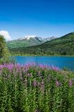 Fireweed und See in Alaska Lizenzfreie Stockbilder