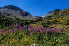 Fireweed Wildflowers Below Firebrand Pass Stock Photos