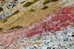 Fireweeds on the Alps slope Royalty Free Stock Photography