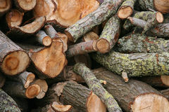 Firewood. Stacked logs of firewood ready to make a fire Stock Photography