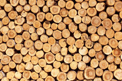 Firewood. Steres for logs cut in fuel wood for renewable Stock Photography