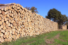 Firewood. Steres for logs cut in fuel wood for renewable Royalty Free Stock Photo