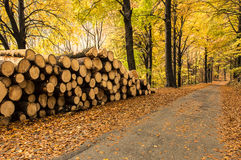 Firewood. Pile of firewood in the forest in autumn stock photos