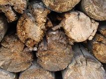 firewood Imagem de Stock
