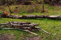 firewood Foto de Stock