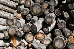 Firewood. Trees for firewood for fuel Royalty Free Stock Images
