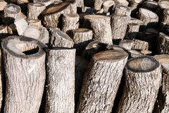 Firewood. Trees for firewood for fuel Stock Image